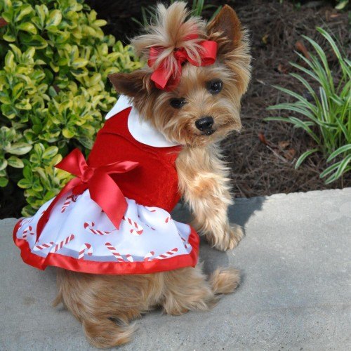 Holiday Christmas Candy Cane Dress with D Ring and Leash