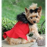 Red Wool Classic Dog Coat Harness and Fur Collar with Matching Leash
