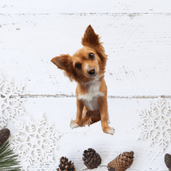 Foods your pooch should avoid